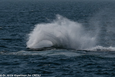Curl produced by a 45000 lb whale's tail throw