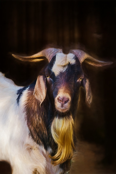 Billy Goat II