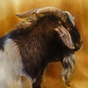 Billy Goat 115 ver 1 A