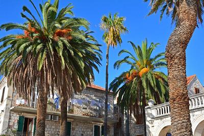 Palm Trees Hvar