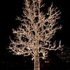 LARGE TREE AT CHRISTMAS