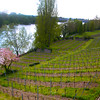 Aschaffenburg Germany, Vineyards along Rhein