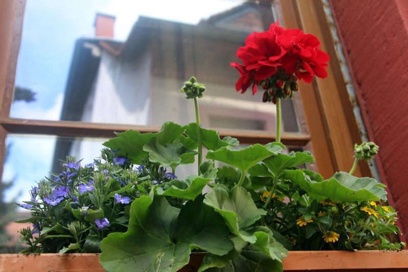 Heidelberg Germany, Traditional Flower Box