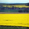 Prague, Czech Republic, View on Canola Fields Outside Prague