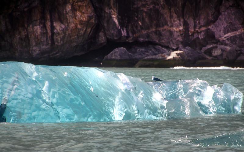 Un-Cruise Adventures, Sea Bird on Ice, Dawes Glacier