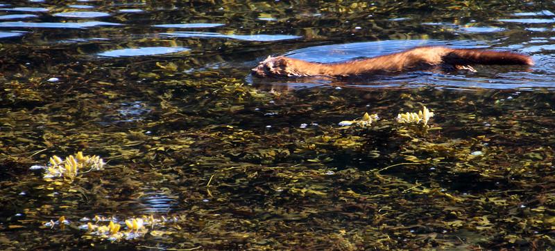 Un-Cruise Adventures, Otter, Stephens Passage Area