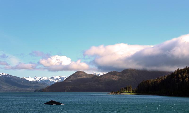 Un-Cruise Adventures, Humpback Whale Surfacing, Idaho Bay Inlet