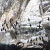 Un-Cruise Adventures, Herons, Glacier Bay