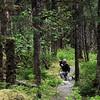 Un-Cruise Adventures, Rain Forest, Bartlett Cove, Glacier Bay National Park
