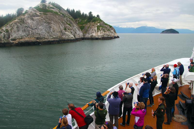 Un-Cruise Adventures,  Glacier Bay, Wildlife Sightings