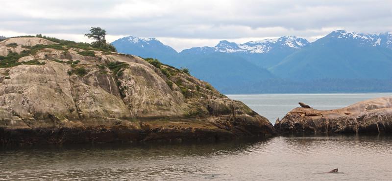 Un-Cruise Adventures, Sea Lions, South Marble Island, Glacier Bay National Bay