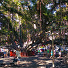 Hawaii, UnCruise Adventures, Banyan Tree Park, Lahaina Maui