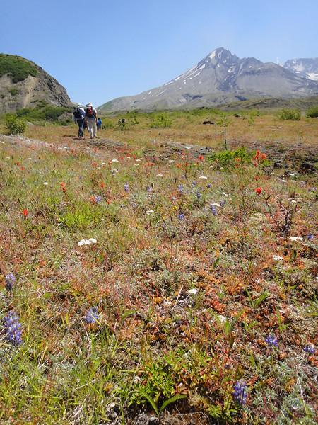 Hike flowers