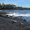 Turtles bask on the black sand beach at Punaluu.