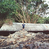During the Big Island flood of 2000, this culvert from the Komohana Street bridge washed into the back yard of the Mishima family. Photo courtesy Helen Mishima.