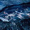 [P87] [RJan 13 1987] [U.S. Geological Survey Photo by J.D. Griggs]