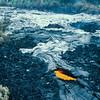 [P87] [RDec 19 1986] [JG8678 Skylight in lava tube Kilauea E. Rift.] [U.S. Geological Survey Photo by J.D. Griggs]