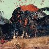 [P81] [1955 Puna Mac? J. Eaton?] [HI Eruptions Puna 1955 Kilauea Iki 1959]