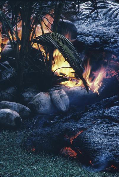 [KER Lava in yard of Louis Pau Home. UG 8001 R11.26.86]