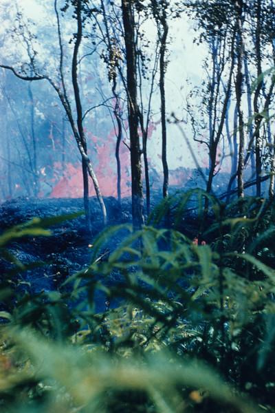 [P81] [Puna 1955 ... J. Eaton?] [HI Eruptions Puna 1955 Kilauea Iki 1959]