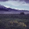 [Alaska] [Katmai WIldflowers Decker]
