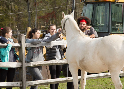Community Service Day at HORSE of CT