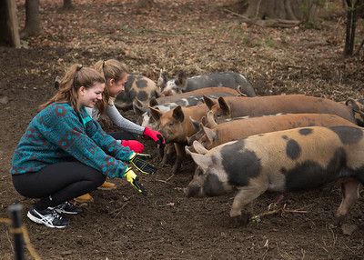 Community Service Day at Truelove Farm