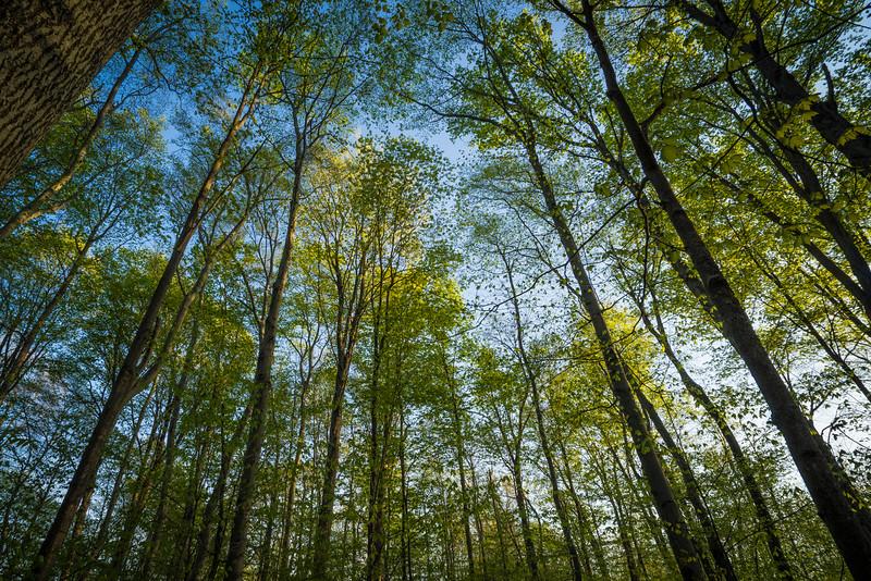 roberts_Sacred Grove-1447