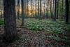 roberts_Sacred Grove-1050-HDR-Edit