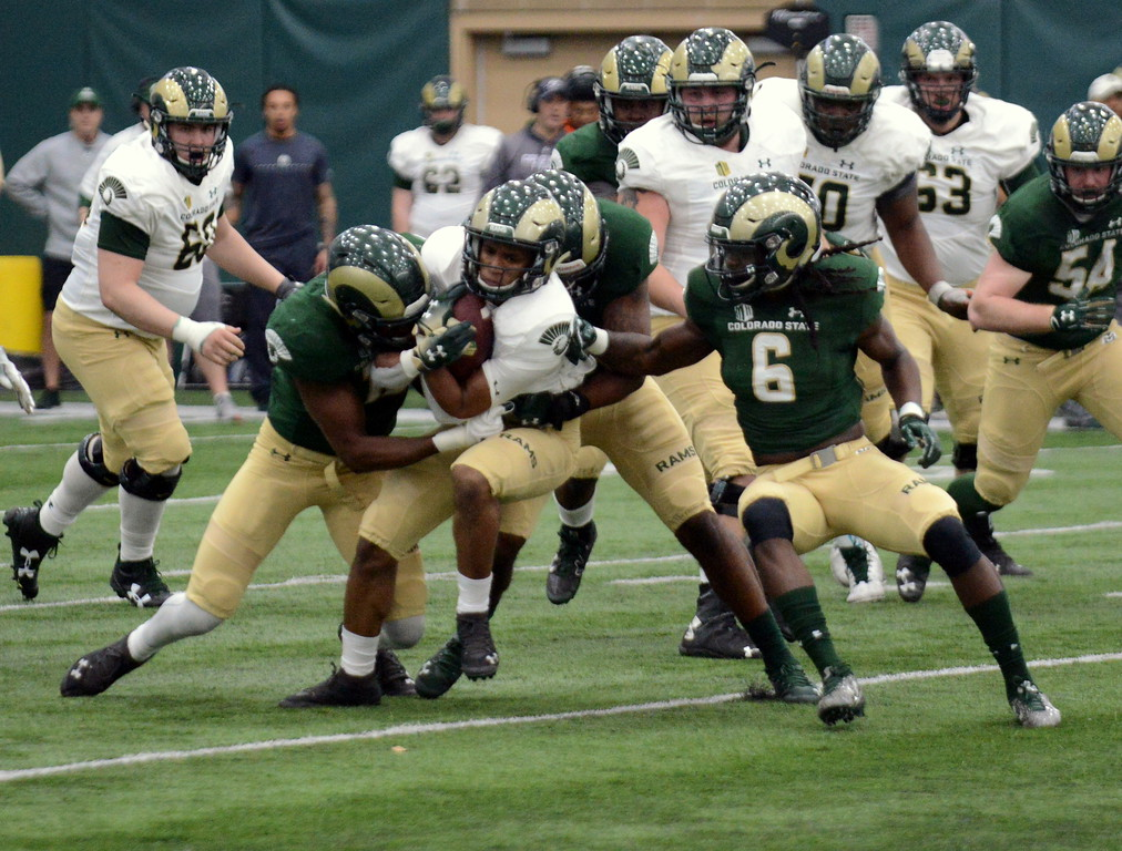 . Colorado State\'s defense swarms to back Hunter Williams during Thursday\'s scimmage at the indoor practice facility. (Mike Brohard/Loveland Reporter-Herald)