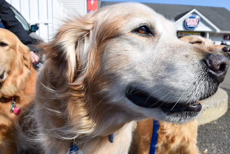 Educated Canines Assisting with Disabilities Program