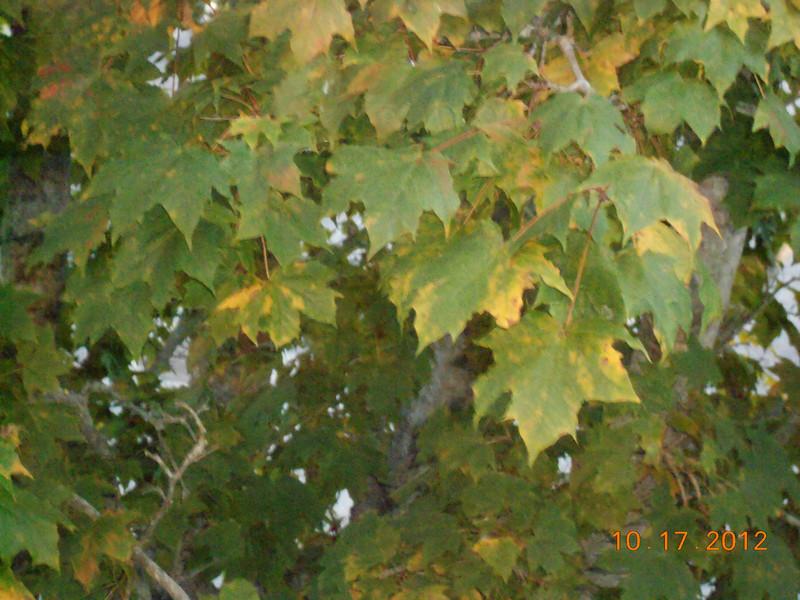 Leaves starting to turn