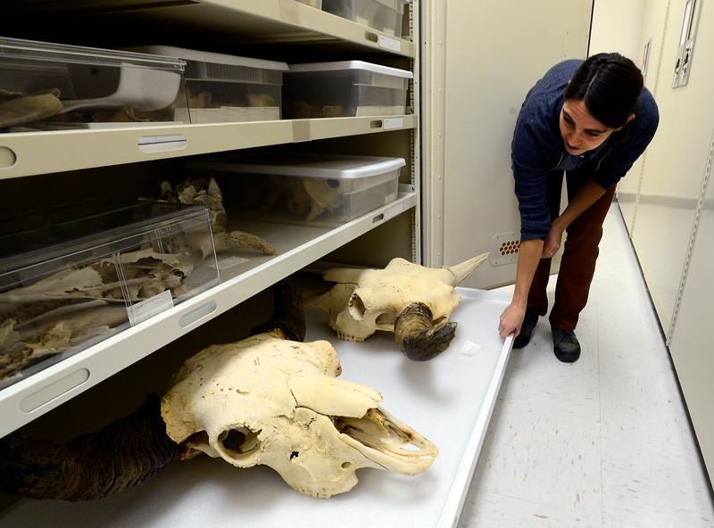 CU Natural History Museum