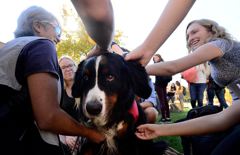 CU Therapy Dogs