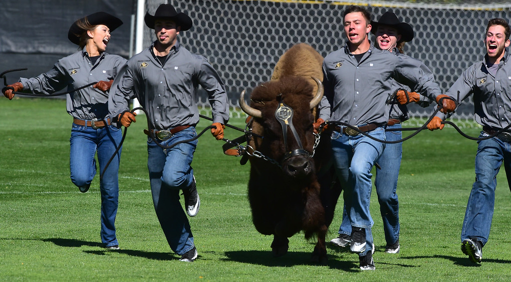 . Ralphie The Buffalo is run onto the field before University of Colorado\'s soccer game against Stanford at Prentup Field in Boulder on Sunday.  Paul Aiken Staff Photographer Oct 8 2017