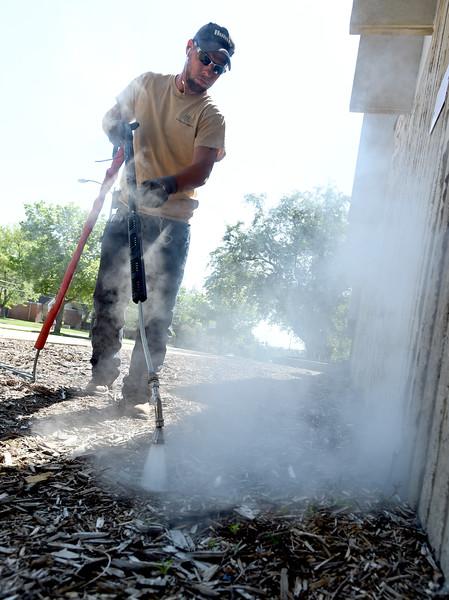 CU Steam Weeding