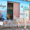 Edie Sanchez_3 Shopping Bike and Donkey
