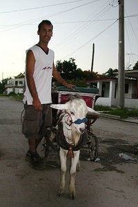 - A Boy and his Goat - Suburbs of Havana