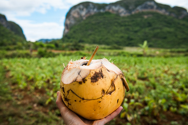 Viñales Coconut