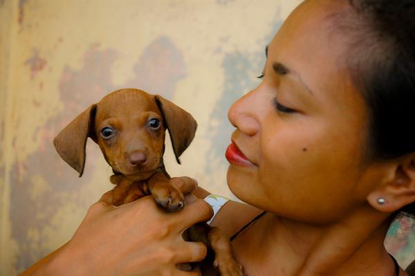 Dashshund Puppy<br /> Baracoa