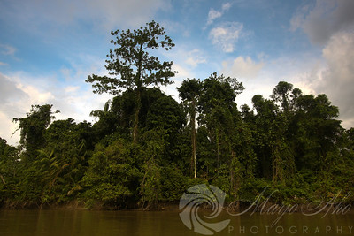The vegetation on the April River is a dense rainforest, quite different from the grassy plains on the Sepik.
