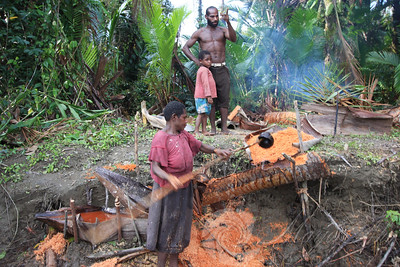 It is the womens task to make sago. She cuts down the sago palm, tediously grinds down the trunk into fiber pulp using a stone tool and then filters out the starch by sifting  water through the sago pulp using a  scoop make of a coconut shell and a filter make of falm husk. The resulting starchy paste is flatteed into flat cakes and cooked on a  hearth.