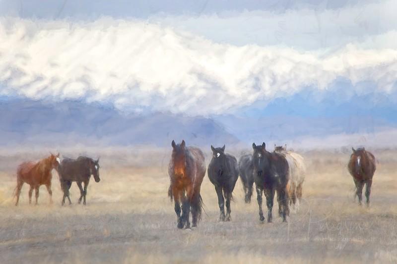 Winter in the Desert