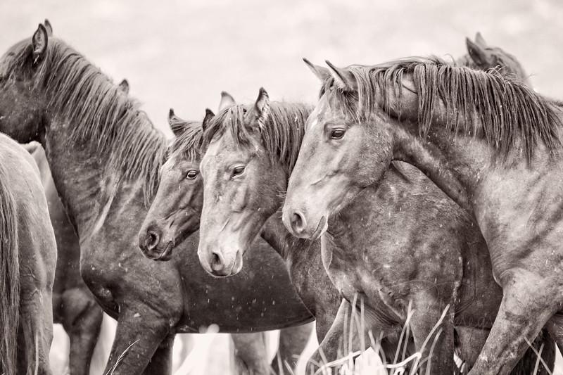 Wild Horses in the Rain