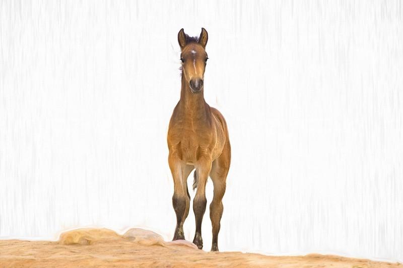 DesertFoal