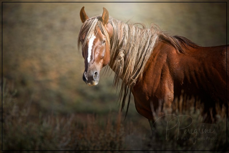 Pilot Butte Stallion w/Fairy Braids