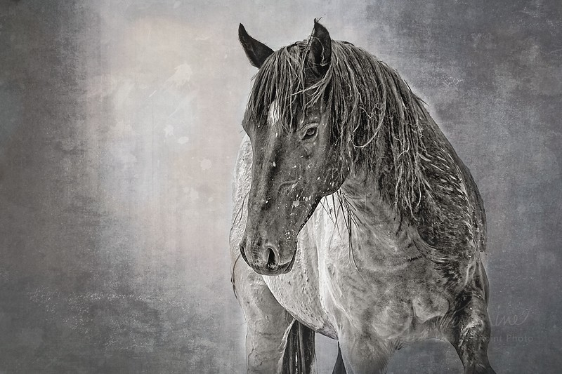 Cooling Off-Wild Horse