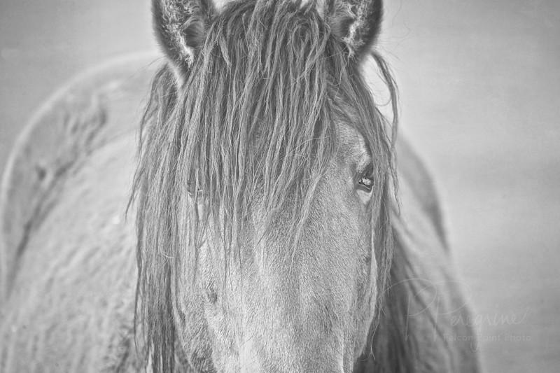 HorseSnow