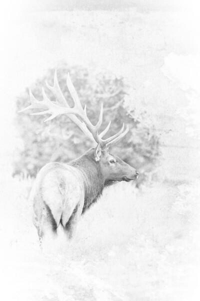 Elklight
