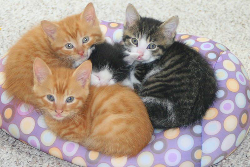 Kelle's Kute Kittens (free for the taking!)